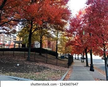 Colorful autumn trees near the Margaret Mitchell House. Atlanta, GA.