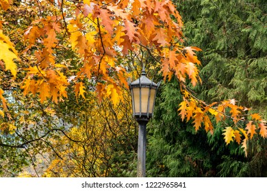 Colorful Autumn Trees and Old Lamp Post in a Park.
