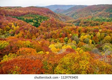 Colorful autumn trees on the Shirakami mountainous wide range with red, orange, and golden foliage in Aomori Tohoku Japan, the Jogakura location near Jogakura bridge.
