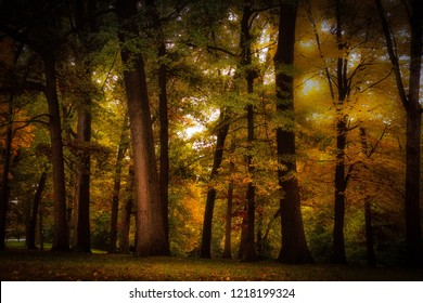 Colorful autumn trees with sunlight poking through