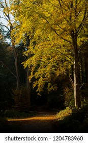 Colorful autumn trees in woodland, forest during middle of the season  around october.