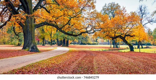 Colorful autumn view of Muskau Park, UNESCO World Heritage Site. Impressive morning scene of Bad Muskau town square, Upper Lusatia region, Saxony, Germany, Europe. Beauty of nature concept background.