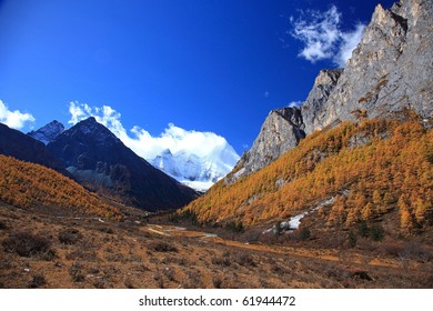 Colorful autumn of Yading national level reserve, Daocheng, Sichuan Province, China.