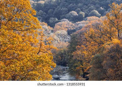 Colorful autumnal trees along mountain creek in North Wales, UK