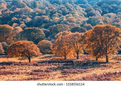 Colorful autumnal trees at secnic valley in Snowdonia, North Wales, UK