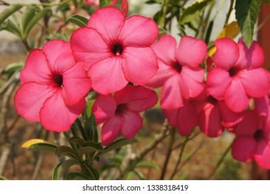 Colorful of Azalea flowers in sunny