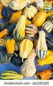 Colorful background of assorted ornamental gourds or quash with variegated yellow, green  orange and white patterned skin viewed from above.