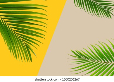 Colorful background Pastel coconut leaf and leaf concept