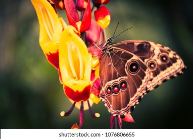 Colorful background with tropical butterfly and orchid, macro, Botanical Garden Prague.