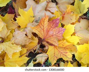 colorful beautiful autumn leaves on the ground