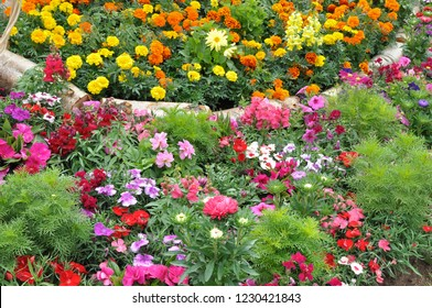 Colorful bedding plants in the English flower garden