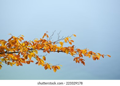 Colorful beech tree branch with yellow and red leaves over silent waters of the sea. Space to add a text.