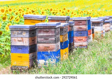 colorful beehives in sunflower' field in Provance, France