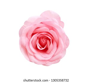 Colorful big light pink rose flowers blooming natural patterns top view isolated on white background with clipping path