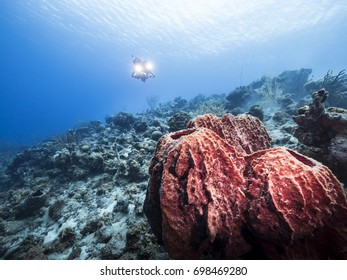 Colorful big sponge as a part of the coral reef in the Caribbean Sea around Curacao with diver photographer in blue background