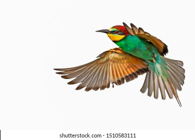 colorful bird in flight isolated on white background