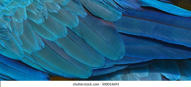 Colorful of  bird macaw feathers, exotic nature background and texture