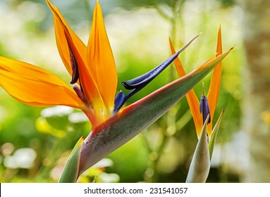 Colorful of  Bird of paradise flower blossom in botanic garden