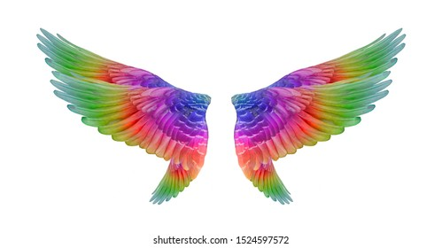 colorful bird wings set isolated  on black background