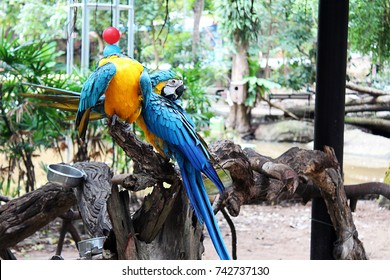 Colorful birds. Macaw