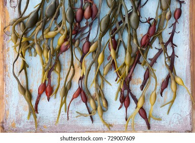 Colorful bladderwrack arranged on old wooden board