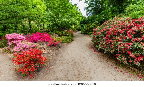 Colorful blooming azalea buches in the park in all kinds of colors