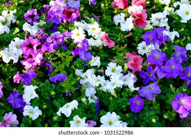 colorful blooming flowers with green leaves background