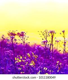 Colorful blooming flowers on yellow sky. Trendy creative minimal pop art design.