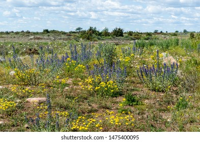 Colorful blossom summer flowers in the World Heritage  Agricultural Landscape of Southern Oland in Sweden
