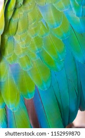 Colorful blue green and orange of wing of the parrot  Macaw  feathers texture background