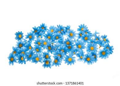 Colorful blue summer flowers isolated over white background