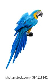 Colorful blue and Yellow Macaw isolated on a white background