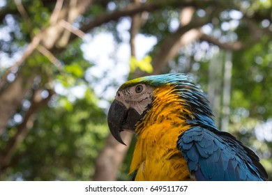 Colorful Blue Yellow Macaw Parrot