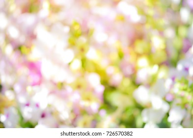 colorful Bokeh,flower bokeh ,abstract background,Orchid Bokeh,Bokeh background, Elemnt of design,defocused.