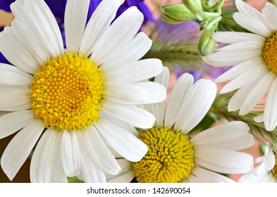 Colorful bouquet with daisies