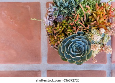 Colorful Bouquet of Succulents, Flowers, and Cacti with a tan tile ground with room for Copy