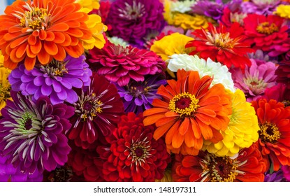 A colorful bouquet of summer zinnias.