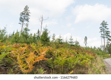 Colorful bracken plants by roadside in a forest