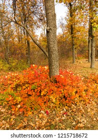 Colorful bright autumn forest. Leaves fall on ground. Autumn forest scenery with warm colors and footpath covered in leaves leading into scene. A trail going into woods showcasing amazing fall colors.