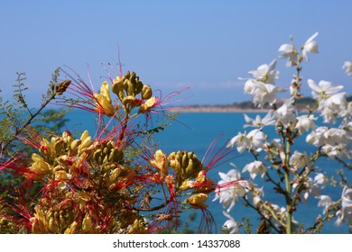 colorful bright flowers at the seaside