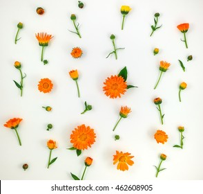 Colorful bright pattern of orange calendula flowers on white background. Flat lay, top view, natural background