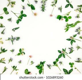 Colorful bright pattern of wild meadow flowers on white background. Flay lay, top view with place for text