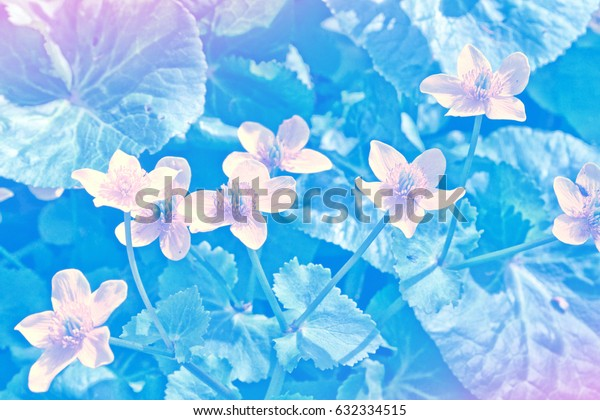 Colorful and bright spring flowers. Natural background.