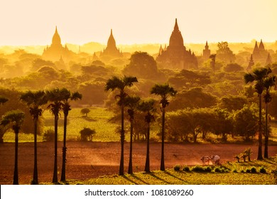 Colorful bright sunrise in with temples, fields and working cattle, Bagan, Myanmar (Burma)