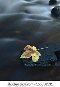 The colorful broken leaf from maple tree on basalt stones in blurred water of mountain river. Beauty  scenery. Broken stone. Beauty maple leaf in water. Fall scenery. Beauty autumn water. Stone rapids