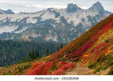Colorful Brush Along Mountain Slope with Tatoosh Range in Background