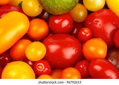 Colorful bunch of different varieties of organic tomatoes in a harvest