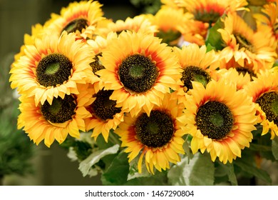 Colorful bunch of yellow sunflowers or Helianthus in a summer nursery in a close up view for flower arranging and interior decor
