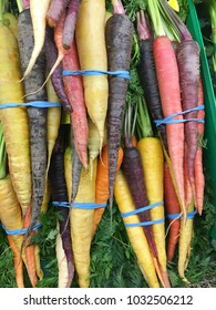 Colorful bunches of rainbow carrots
