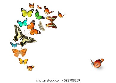 Colorful Butterflies Isolated on a White Background. Insects and Colors in the Wildlife